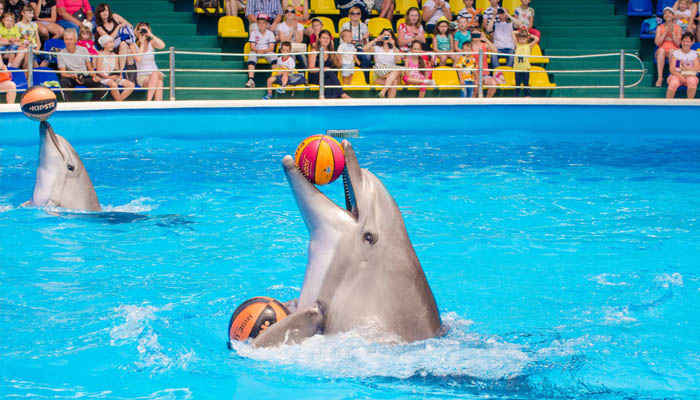 Дельфинарий «Аква-Мир»